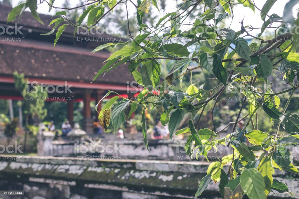 Ancient Ruined Cave Temple Goa Gajah Ubud Bali Elephant