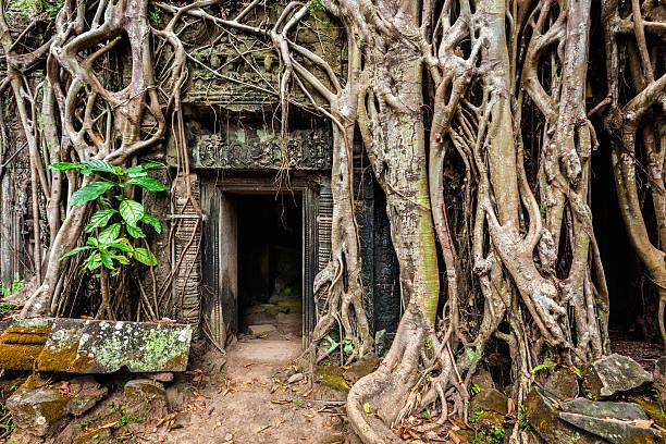 Ancient ruins of Ta Prohm temple, Angkor, Camb stock photo