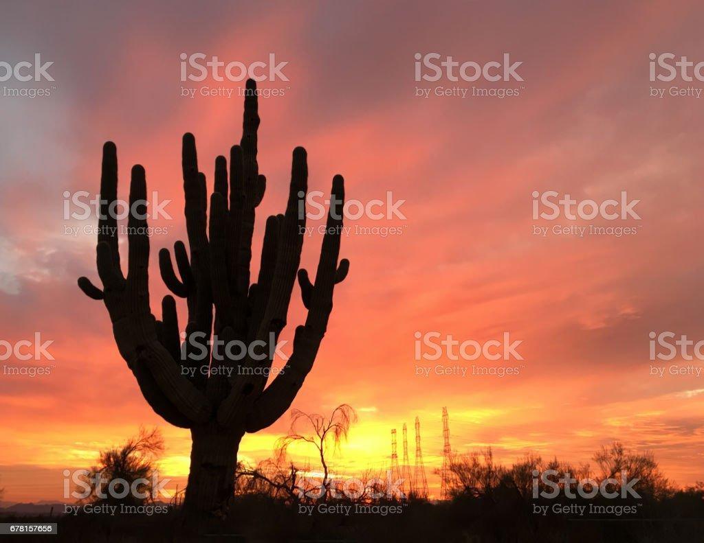Ancient Saguaro cactus tree silhouette against setting sun. stock photo
