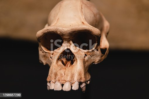 Ancient skull of prehistoric human being. Homo sapience head skull, close up with warm light
