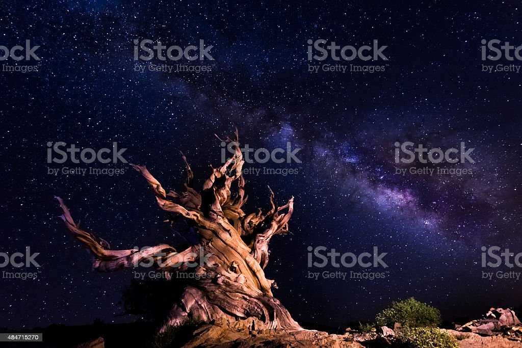 Ancient tree with background of the bright milky way stock photo