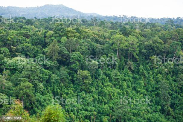 Photo of Ancient tropical forest. The scenic rainforest spot is part of a big national park where wild animals live. Bolaven Plateau, Paksong, South Laos. Soft sunlight. Rainy season. Top view.
