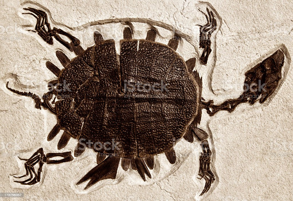 Ancient Turtle Fossil stock photo
