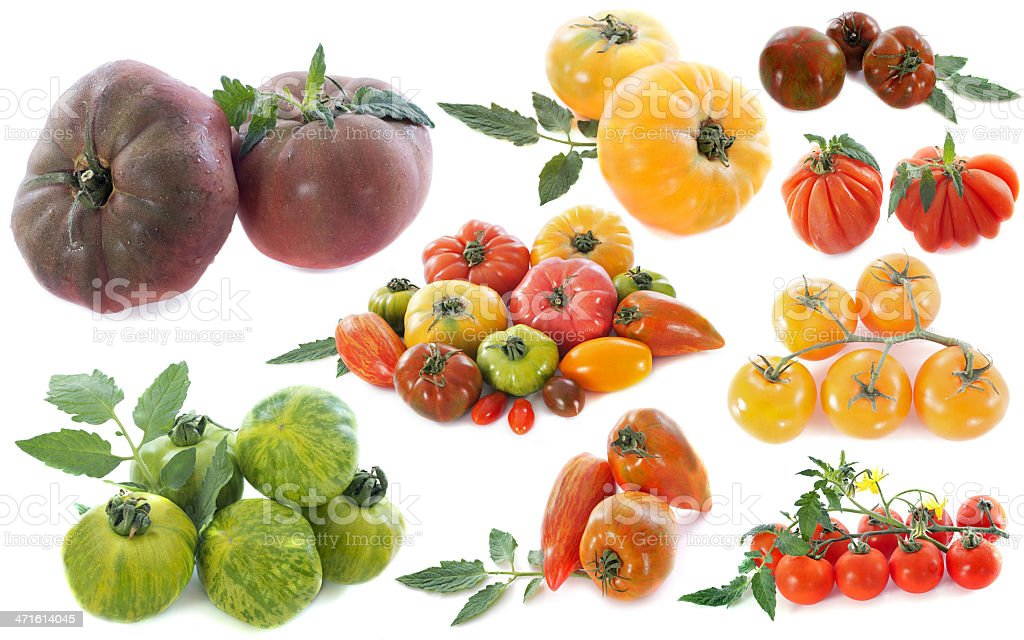 ancient varieties of tomatoes stock photo