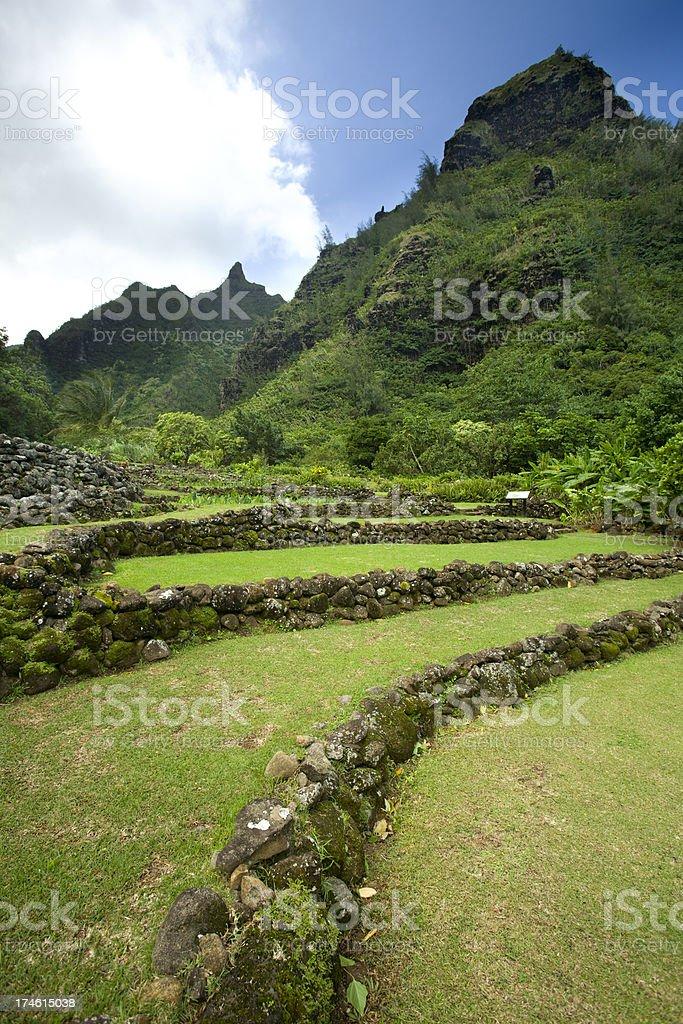 Ancient walls in Hawaiian botanical gardens. stock photo
