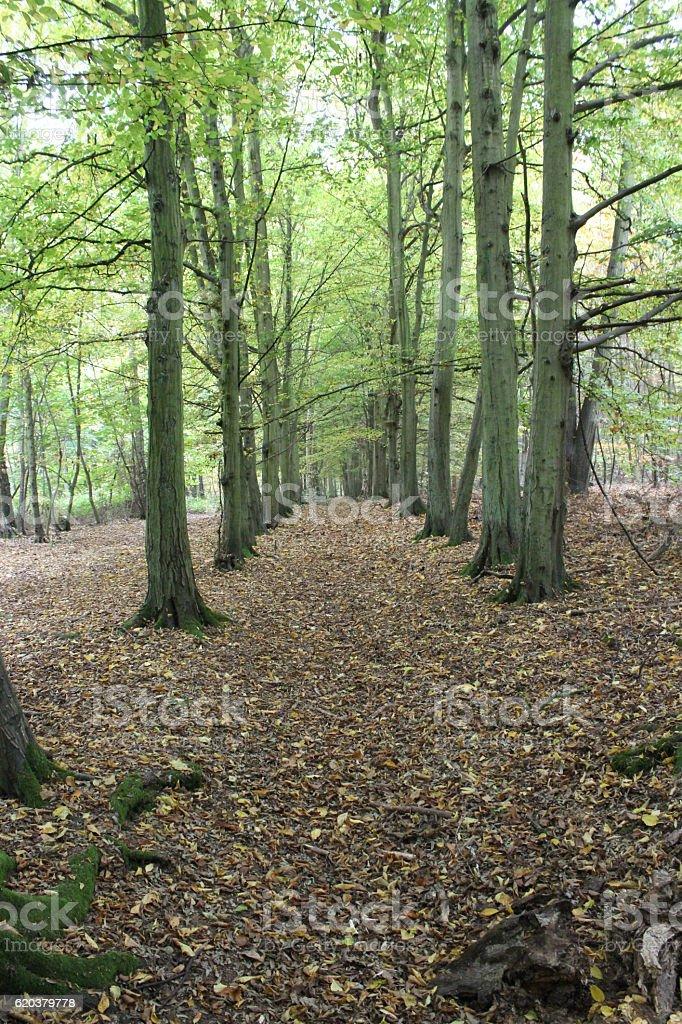 Starożytny woodland  zbiór zdjęć royalty-free