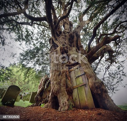 An ancient Yew tree next to a churchyard in an English Village.