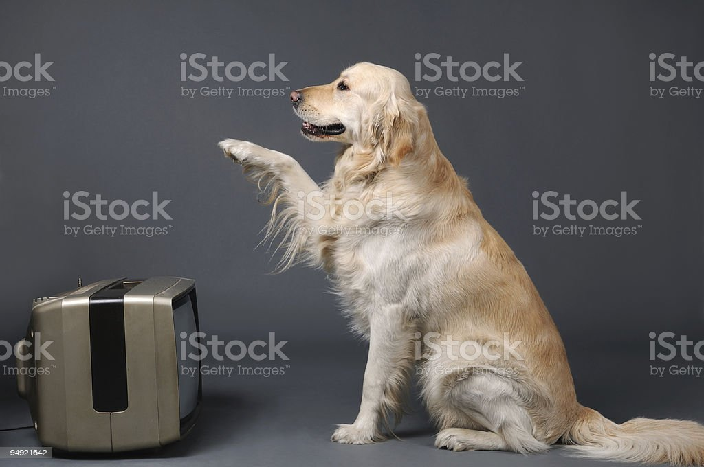 TV and dog royalty-free stock photo