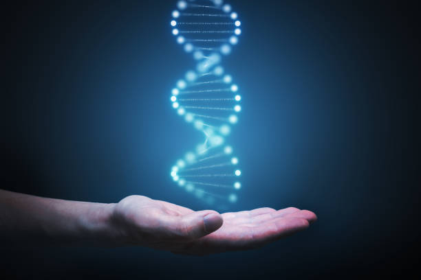 DNA and genetics research concept. Hand is holding glowing DNA molecule in hand. stock photo