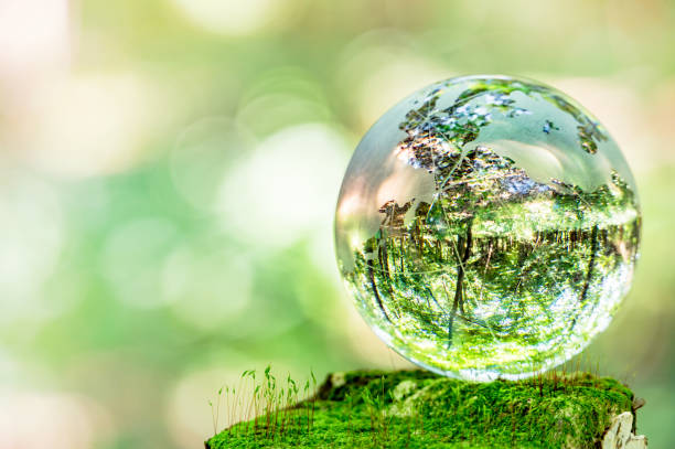 moss and glass globes - sustainable living stock pictures, royalty-free photos & images