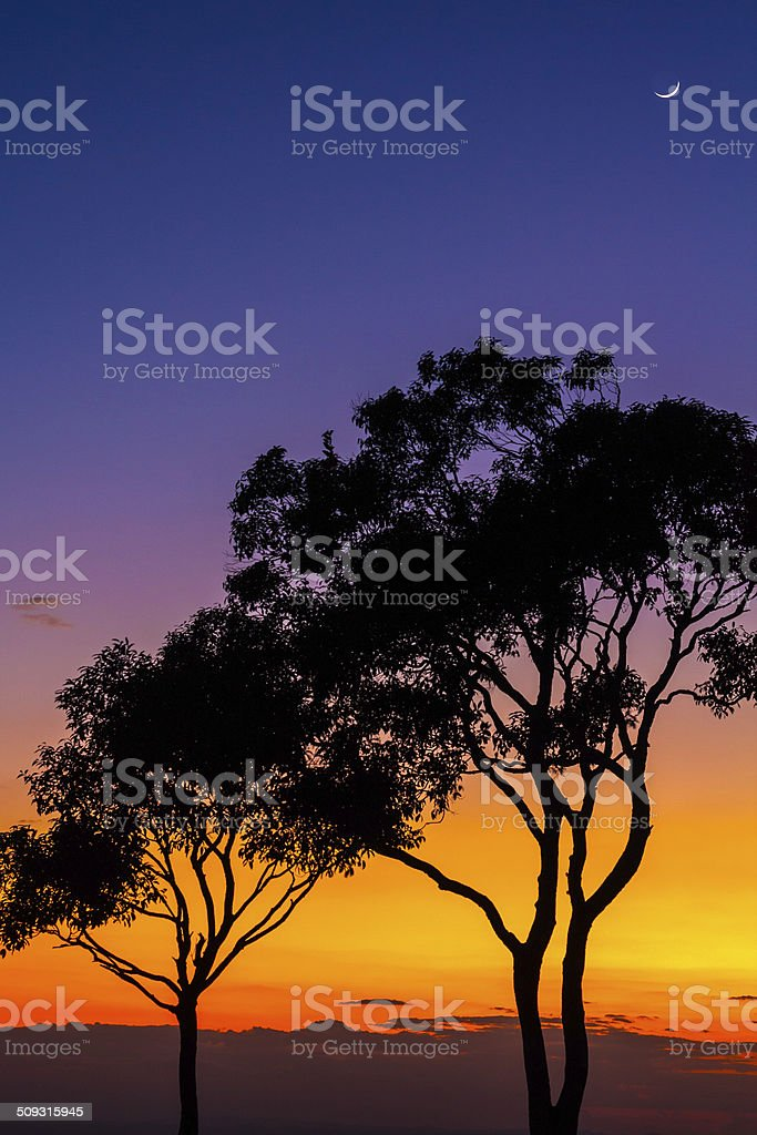 TREES and MOON stock photo