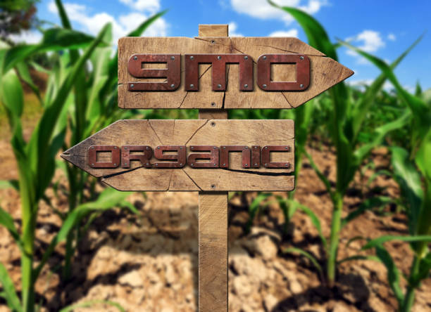 gmo and organic sign on a corn field - genetic modification stock photos and pictures