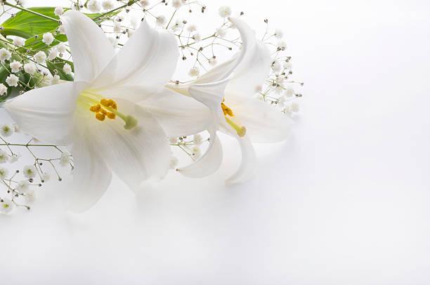 gigli e altri in uno sfondo bianco - funerale foto e immagini stock