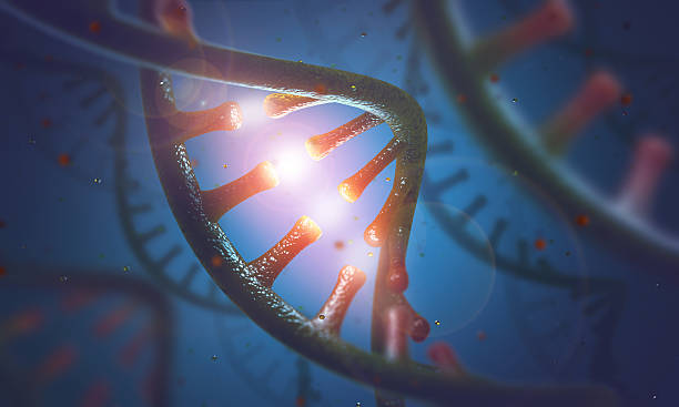 DNA and RNA molecules 3D image concept of DNA and RNA molecules. high scale magnification stock pictures, royalty-free photos & images