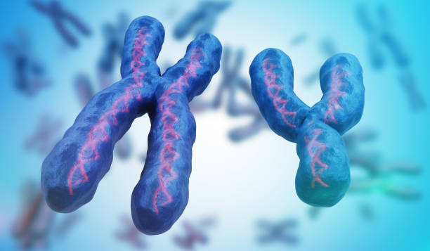 X and Y chromosomes. Genetics concept. 3D rendered illustration. stock photo
