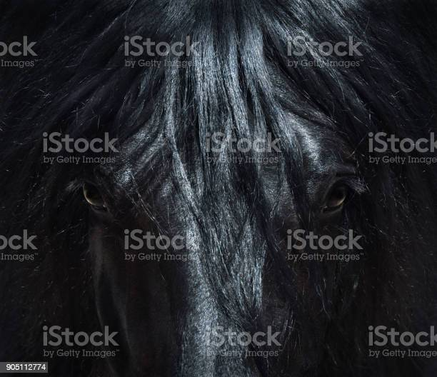 Andalusian black horse with long mane portrait close up picture id905112774?b=1&k=6&m=905112774&s=612x612&h=t9qnzjymgwrfgshmu3gkminvy1y5phodntst7p2rz0g=