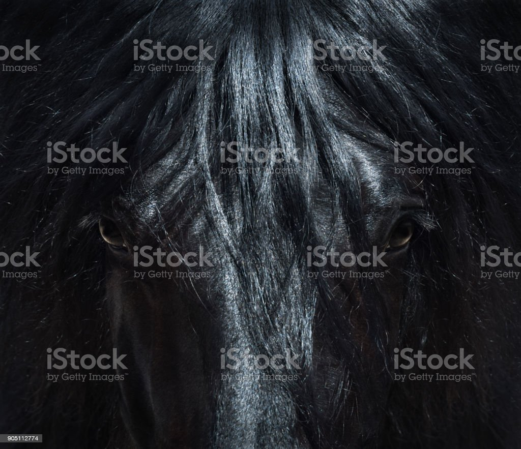 Andalusian black horse with long mane. Portrait close up. – zdjęcie
