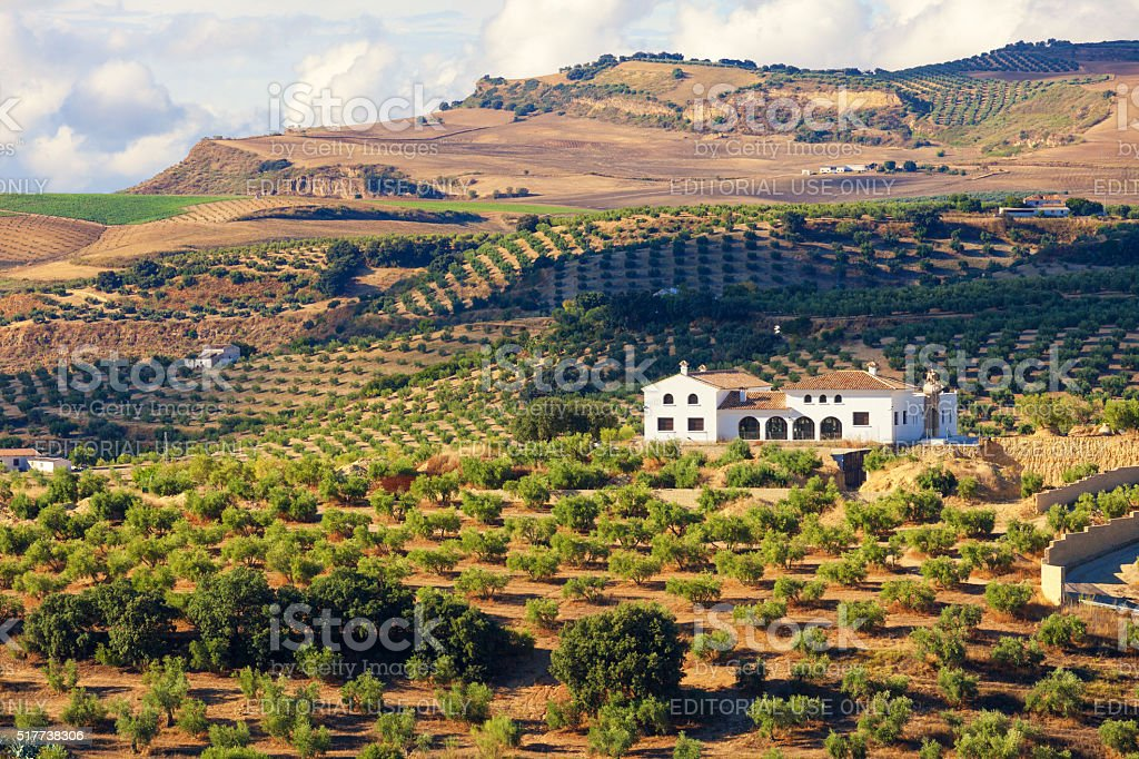 Andalusian cortijo (farmhouse) surrounded by olive groves stock photo
