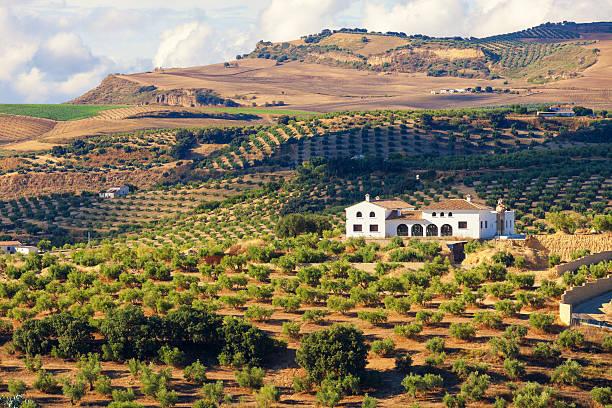 andalou cortijo (ferme) entouré d'oliviers - andalousie photos et images de collection
