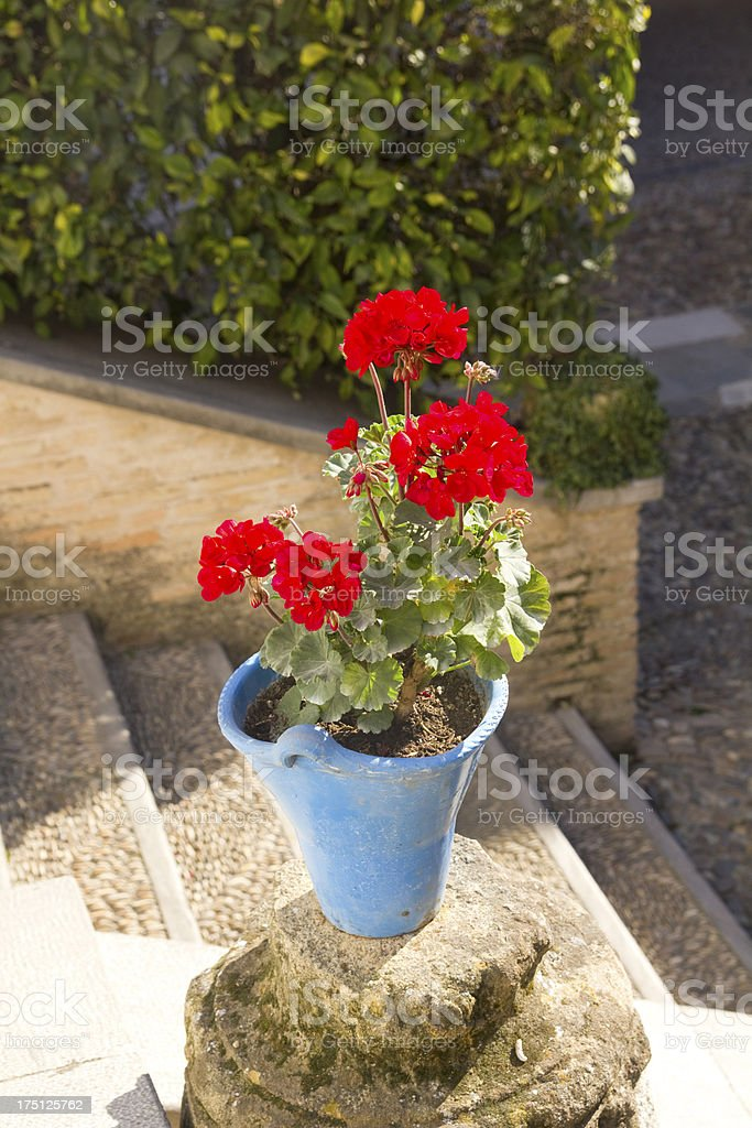 Andalusian geranium royalty-free stock photo