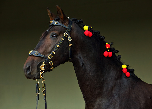 Andalusian horse in dark stable