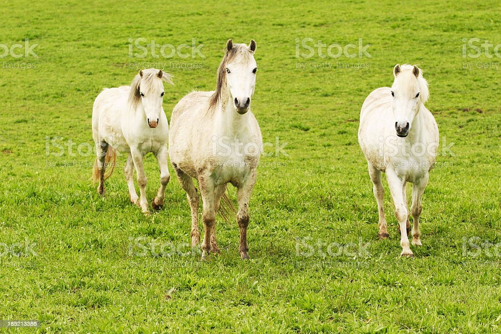 Andalusian Horse Pasture Equine Ranch stock photo