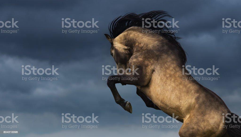 Andalusische Pferd hinten mit dramatischen bedecktem Himmel. Foto mit Platz für Text. – Foto