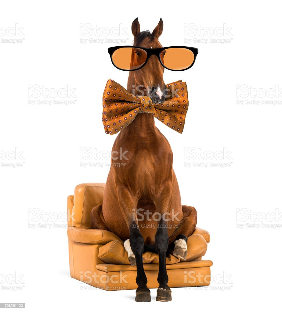 Andalusian horse wearing glasses and a bow tie stock photo