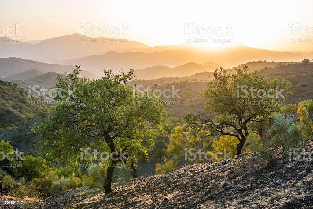 Andalusian landscape at sunset with olive trees in Spain Beautiful Andalusian landscape and olive trees at sunset near Alora, Spain Agriculture Stock Photo