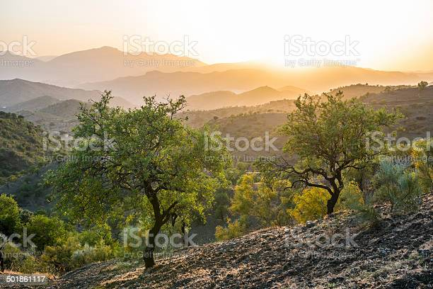 Andalusian Landscape At Sunset With Olive Trees In Spain Stock Photo - Download Image Now