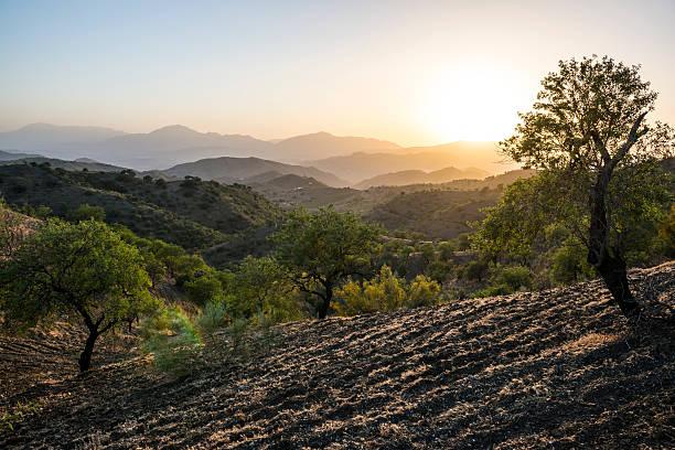 paysage au coucher du soleil andalou d'oliviers, en espagne - andalousie photos et images de collection