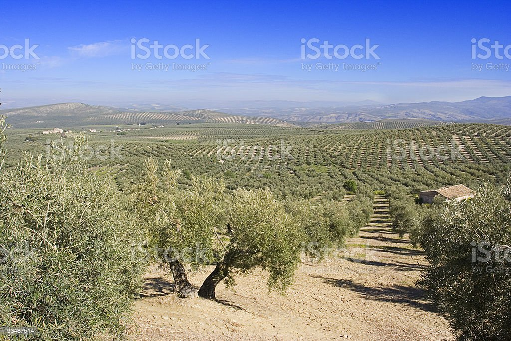 Andalusian landscape stock photo