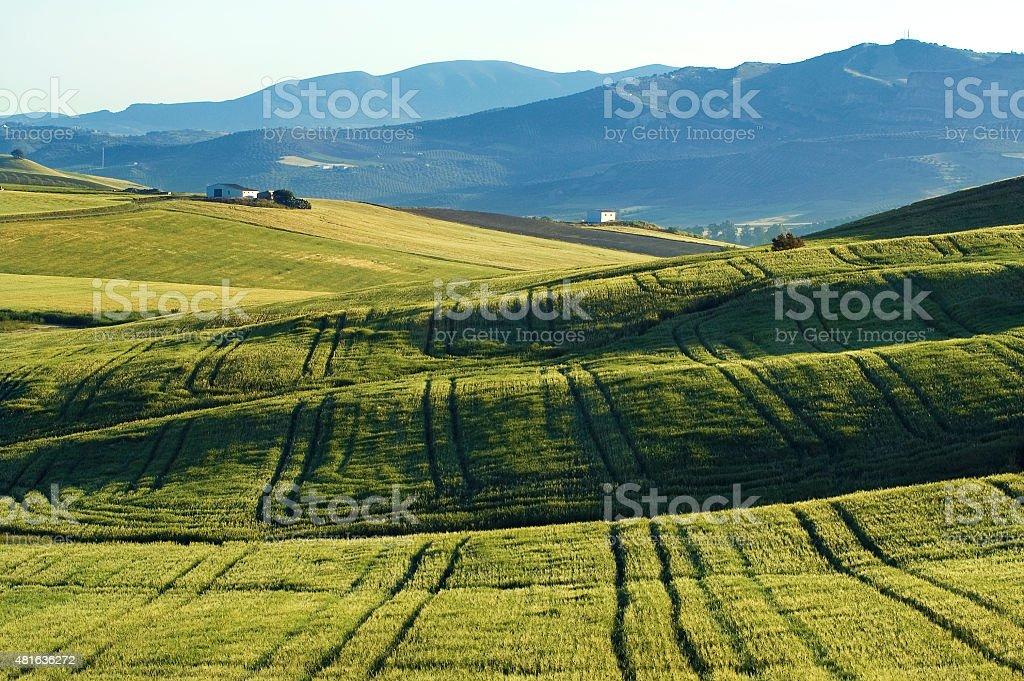 Andalusian landscape, wheatfields, mountains, Sierra de las Cumbres, Andalusia, Spain stock photo