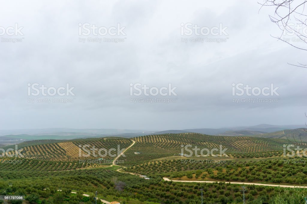 Andalusian landscape with olive trees in Spain on a day in spring stock photo