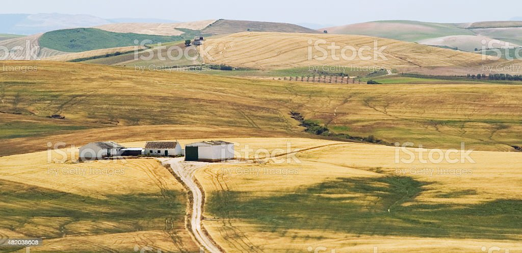 Andalusian landscape with rolling hills and wheat fields, Andalusia, Spain stock photo