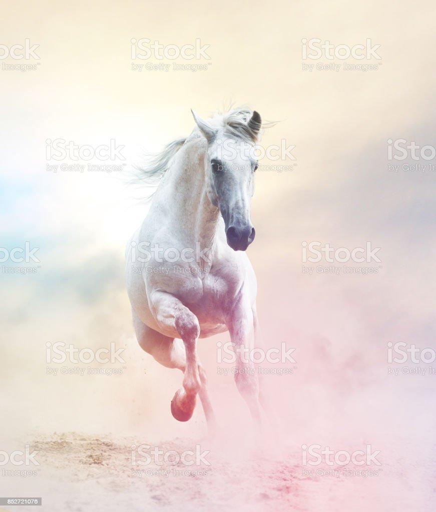 Andalusian stallion stock photo