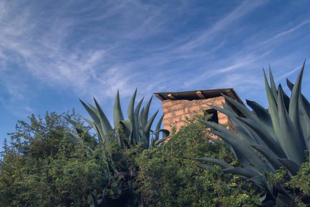 Andean cactus stock photo
