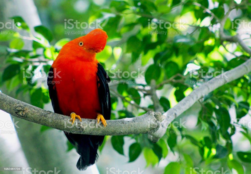 Anden Schwanz des Vogels rock – Foto
