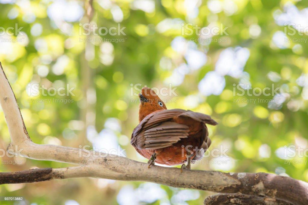 Anden Naturschutzsystem Vogel Pirched auf einem Ast im Waldgebiet – Foto