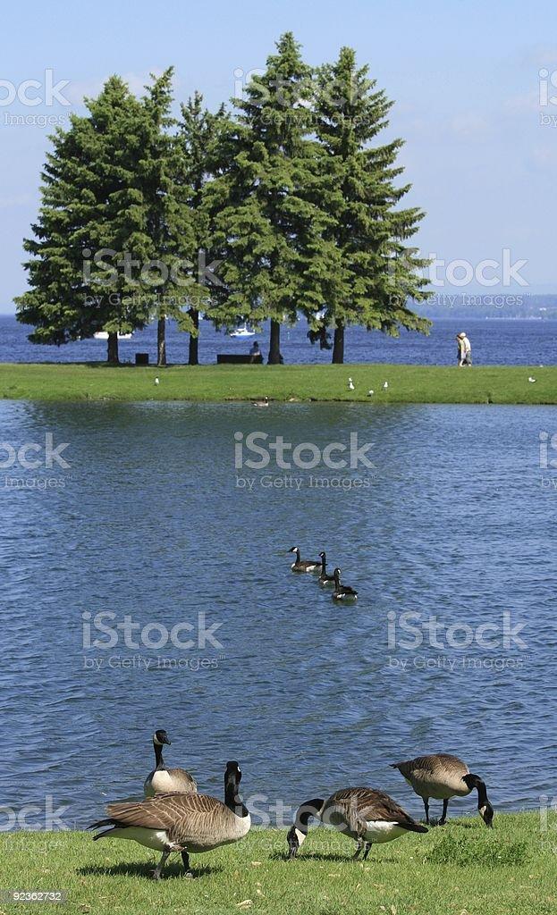 Andrew Haydon Park in Ottawa royalty-free stock photo