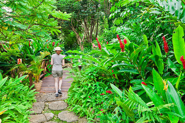 Andromeda Botanic Gardens, Barbados stock photo