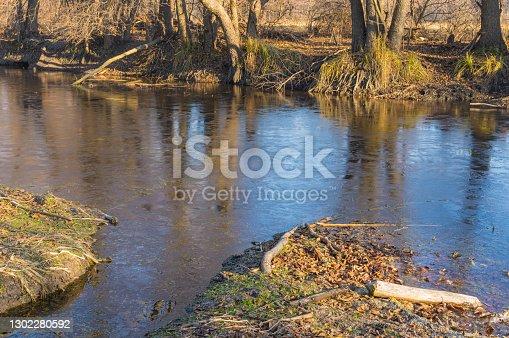 Landscape with small frozen river where beavers prepare their trees for habitation in Poltavskaya oblast, Ukraine