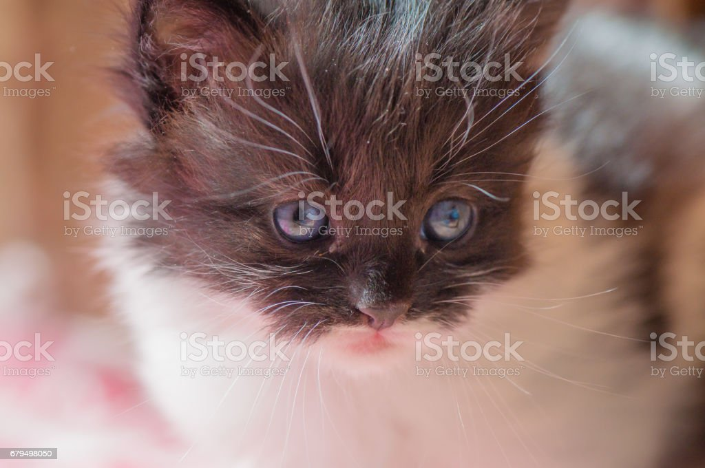 Andy's baby royalty-free stock photo
