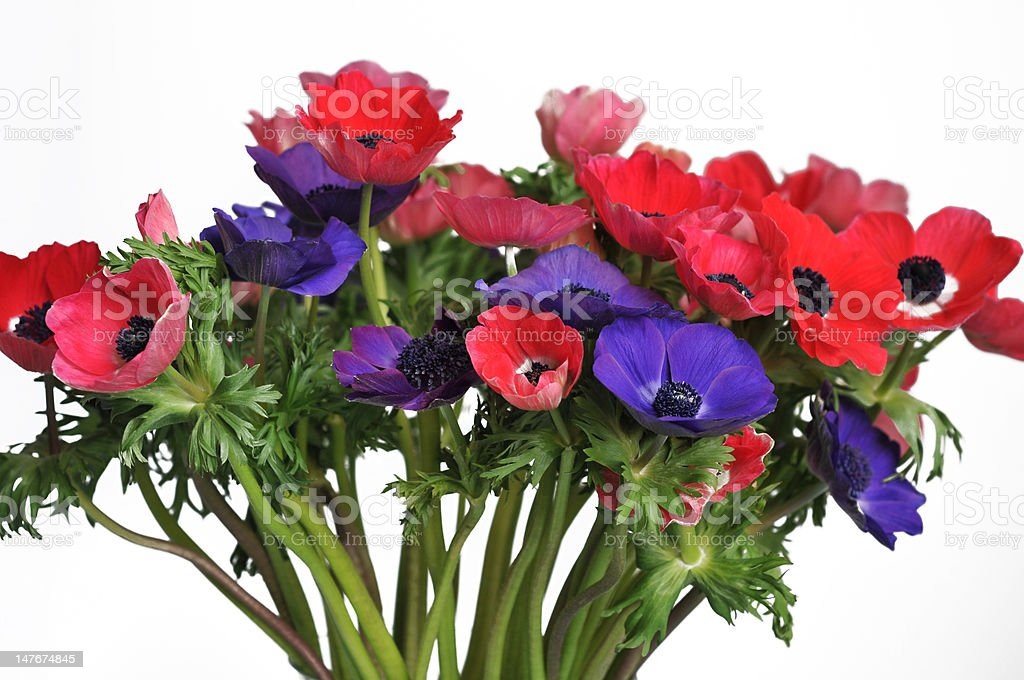 Anemone Bouquet royalty-free stock photo