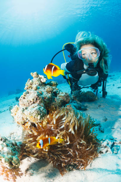 Anemone clownfish Underwater Sea life  Coral reef  Underwater photo Scuba Diver Point of View. Blonde woman scuba diving in background. stock photo