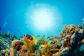 Anemone カクレクマノミ、水中の海洋生物スクーバダイビングの視点