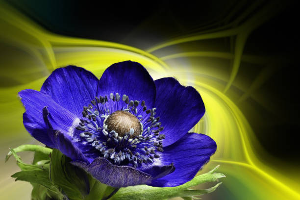 Anemone in front of a colorful abstract background stock photo