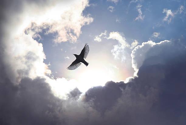 Angel Bird in Heaven bildbanksfoto