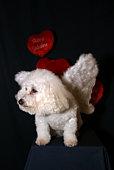 Angel Dog 2