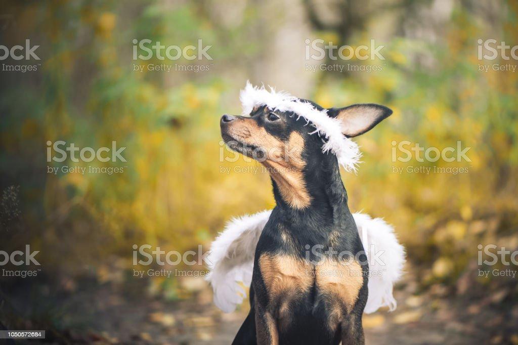 Chien de Angel, portrait d'un chien à l'image d'un ange, dans une couronne de fleurs et avec des ailes blanches. Symbole de la gentillesse et l'amitié des chiens. - Photo